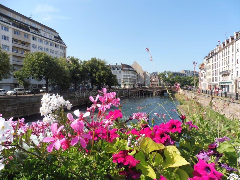 12 67 2000 03 GF Strasbourg Petite France. Immeubles Fleurs Eaux ciel Rouges Roses Blanc Alsace Europe Petunia Règne/Plantae Arbre stock photos