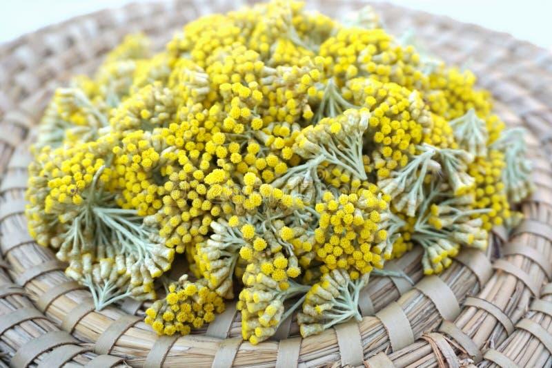 Immortelle blommor valde från trädgården, Helichrysumarenariumbakgrund royaltyfria foton