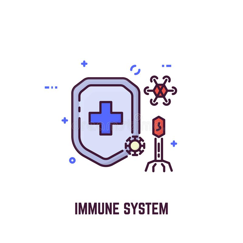 Immune system and shield vector illustration