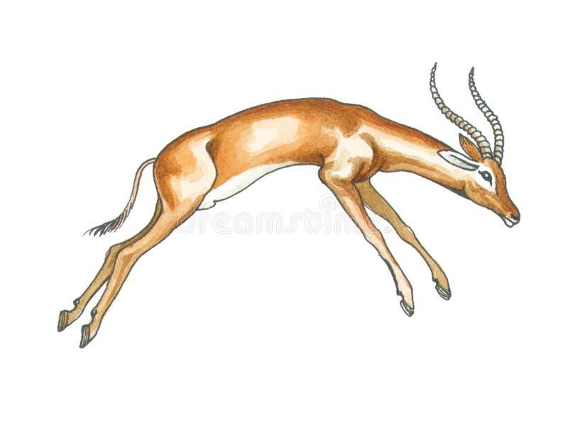 Impala stock illustration