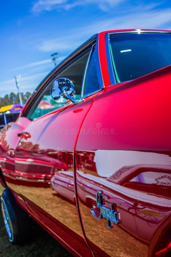 impala lizenzfreie stockbilder