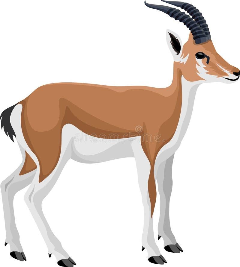 Impala persan de gazelle de vecteur illustration libre de droits