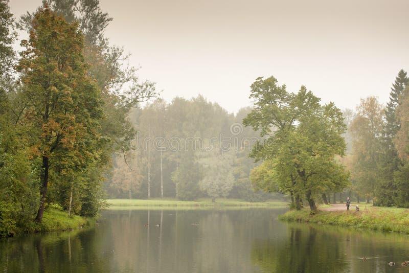 Impallidisca la natura tonificata della foresta nella stagione di caduta immagine stock