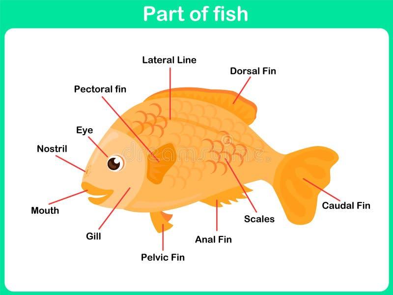 Imparando le parti del pesce per i bambini - foglio di lavoro illustrazione di stock