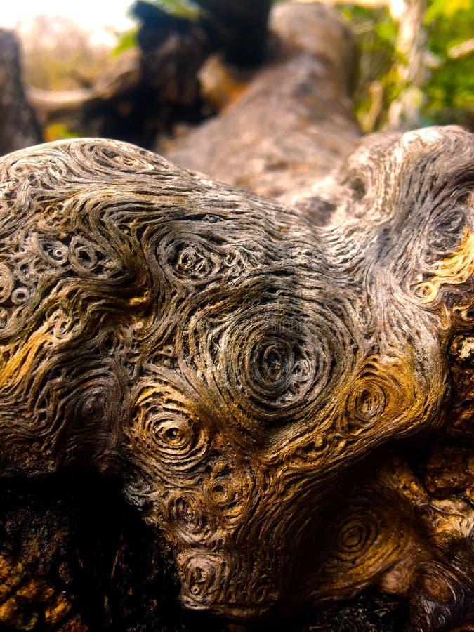 Impasto in the bark stock photography
