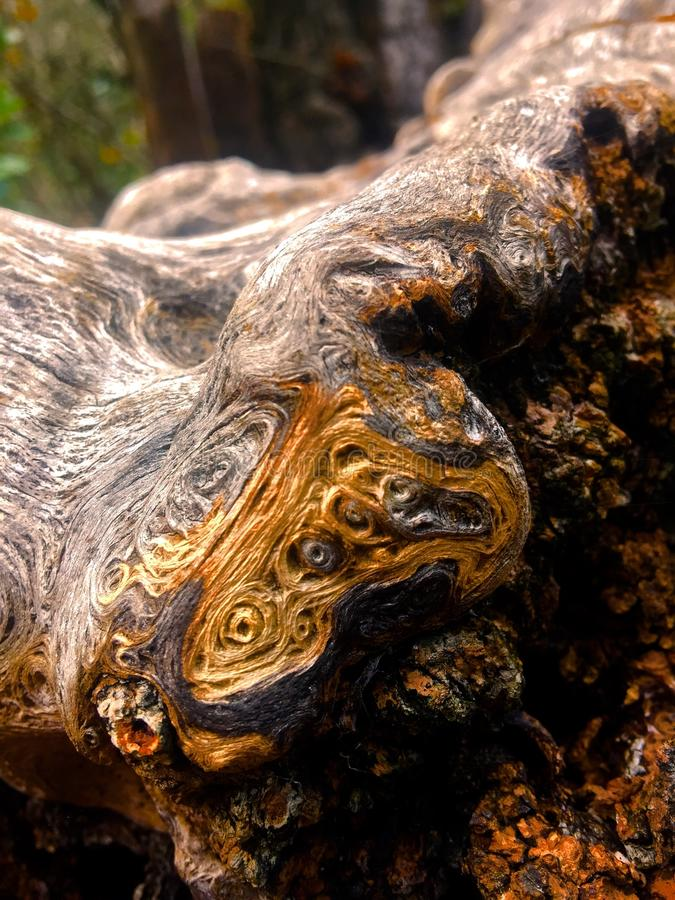 Impasto in the bark stock photos