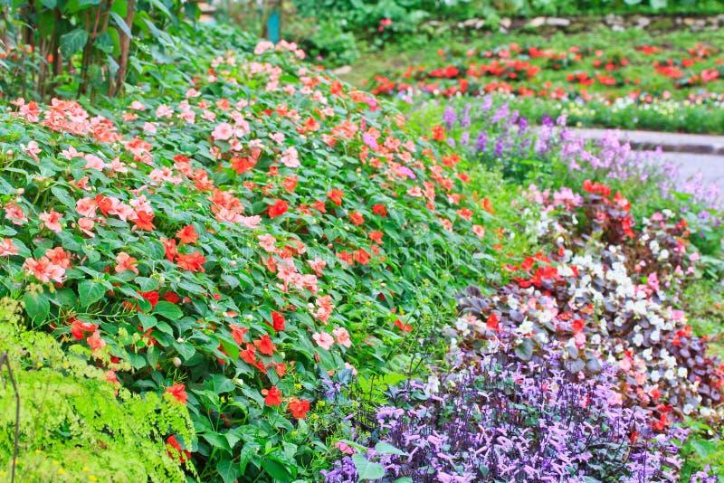 Impatiens-Blumen lizenzfreie stockfotos