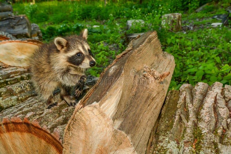 Impatto di perdita dell'habitat sulle specie fotografie stock libere da diritti