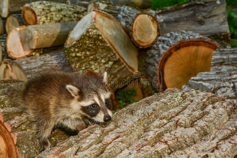 Impatto di perdita dell'habitat sulle specie fotografia stock