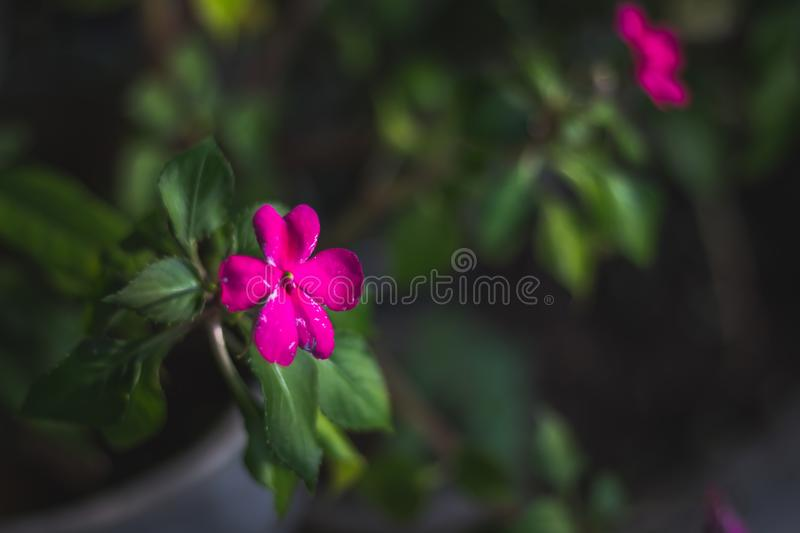 Imperfections de Bokeh de fleurs photo libre de droits