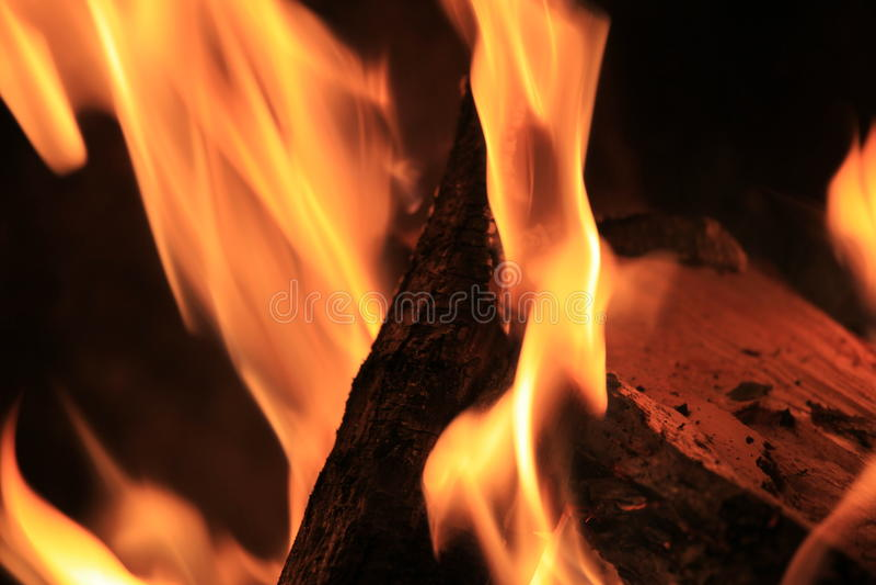 Impianti del fuoco immagini stock libere da diritti