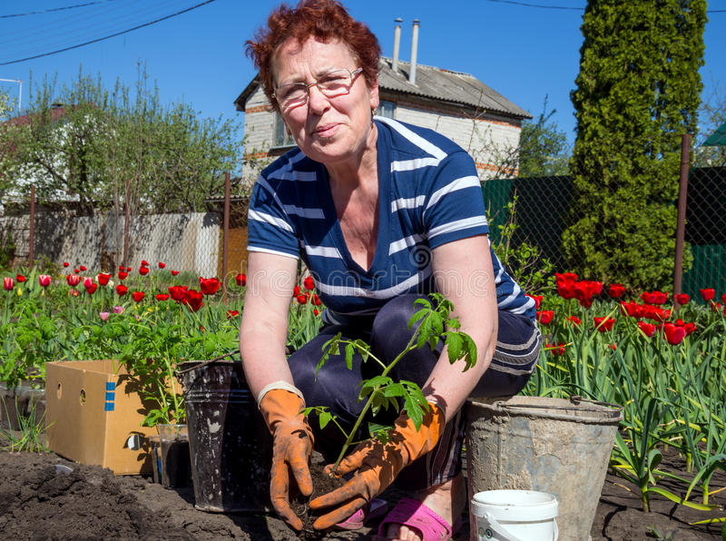 Impianti di piantatura della primavera nella residenza di estate fotografia stock libera da diritti