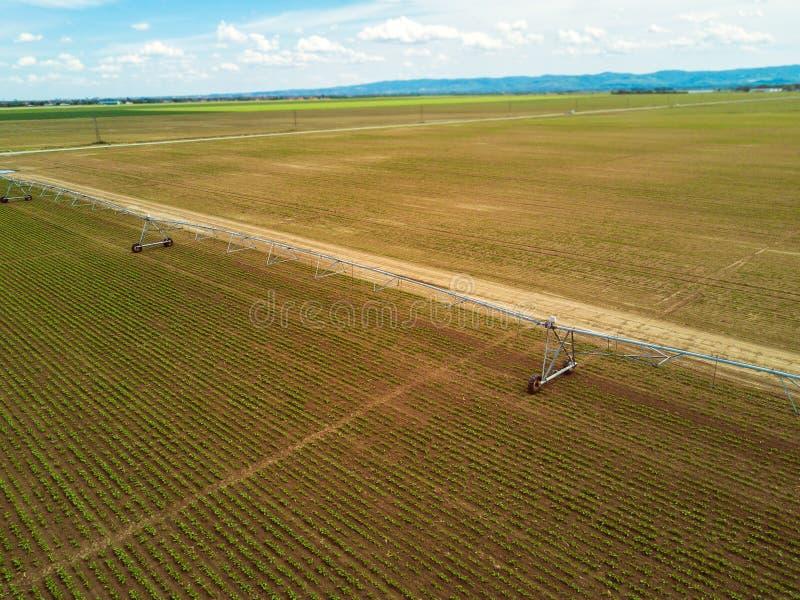 Impianto di irrigazione agricolo sul plantati coltivato della barbabietola da zucchero fotografie stock libere da diritti