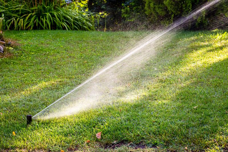 Impianto di irrigazione automatico che innaffia erba verde nel giorno soleggiato Spruzzatore del prato inglese che castra acqua fotografie stock libere da diritti