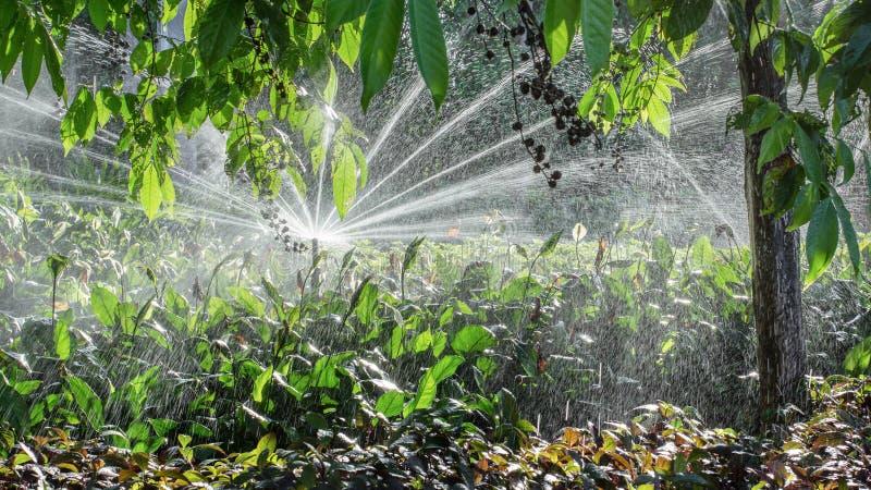 Impianto di irrigazione automatico del giardino immagini stock libere da diritti