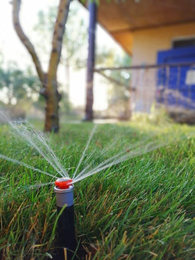 Impianto di irrigazione automatico per il giardino vicino al marciapiede fotografia stock libera da diritti