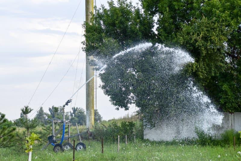 Impianto di irrigazione che innaffia nel giardino Innaffiatura delle piantine immagini stock
