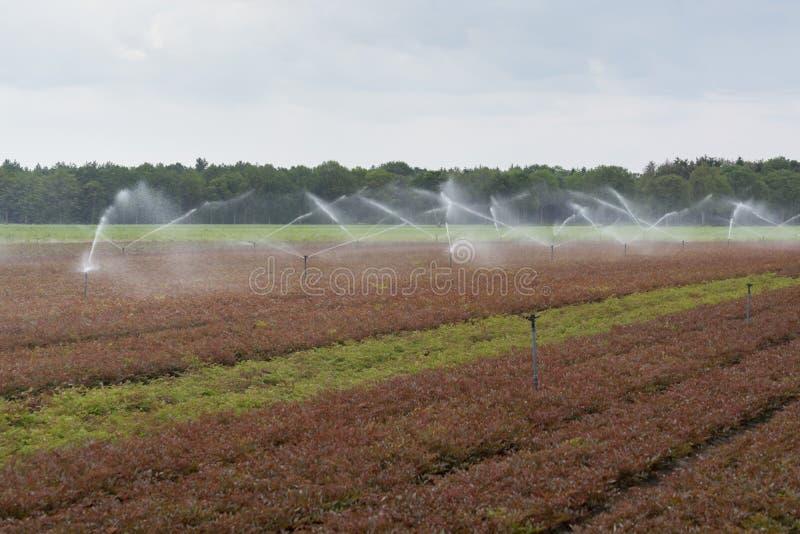 Impianto di irrigazione del campo con gli spruzzatori nel lavoro fotografia stock