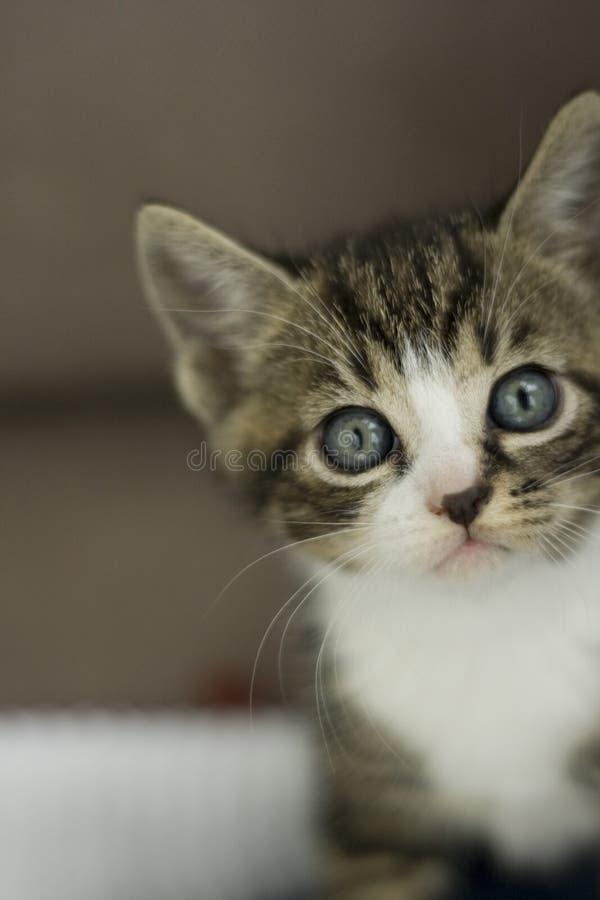 Implorando o gato foto de stock royalty free