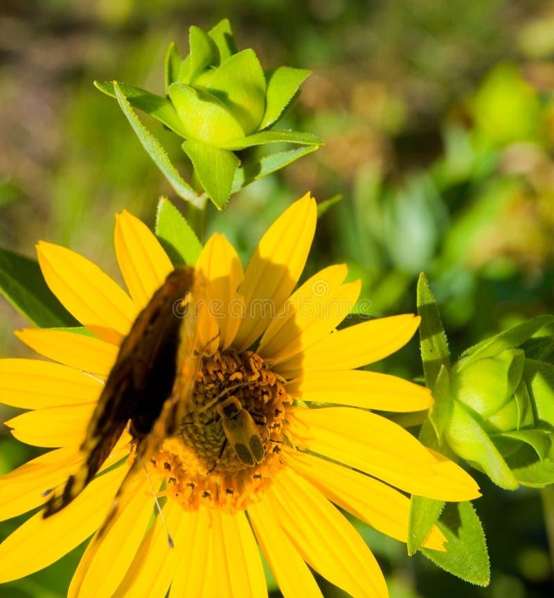 Impollinazione del fiore immagini stock libere da diritti