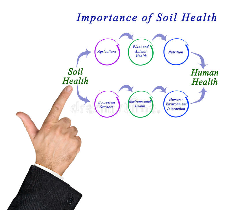 Importance of Soil Health. Diagram of Importance of Soil Health stock photo