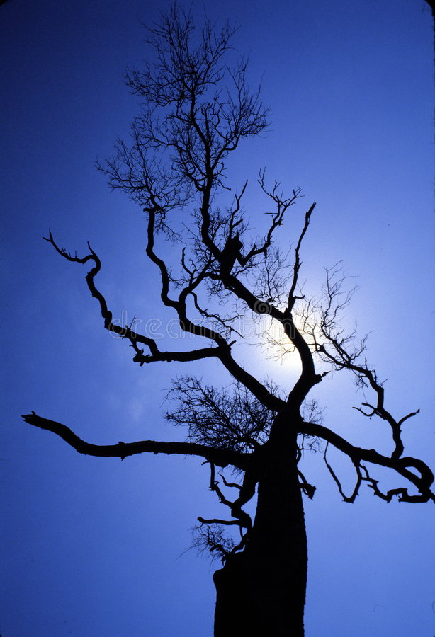 Download Imposing tree stock image. Image of noon, blue, shadow - 2693345
