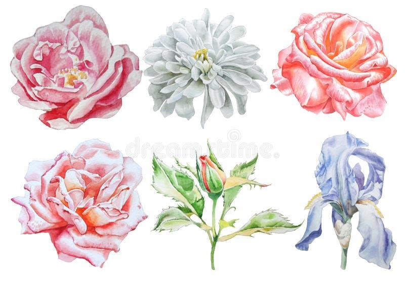 Imposti con i fiori Rosa iride crisantemo Illustrazione dell'acquerello illustrazione vettoriale