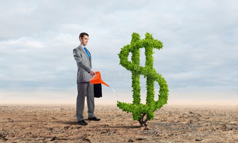 Imprenditore che innaffia pianta verde del dollaro immagine stock