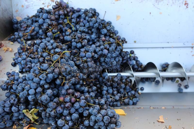 Imprensa espiral para esmagar uvas fotografia de stock