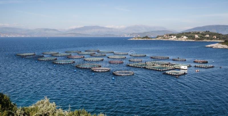 Impresa di piscicoltura con le gabbie di galleggiamento fotografia stock libera da diritti