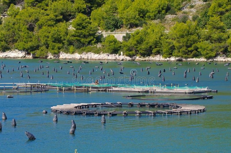 Impresa di piscicoltura marina dell'open water immagini stock libere da diritti