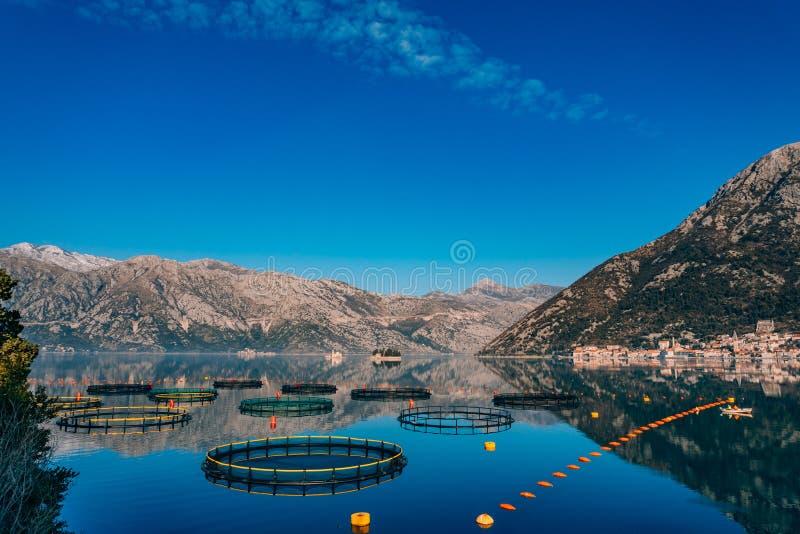 Impresa di piscicoltura nel Montenegro L'azienda agricola per crescere e l'impresa di piscicoltura fotografia stock libera da diritti