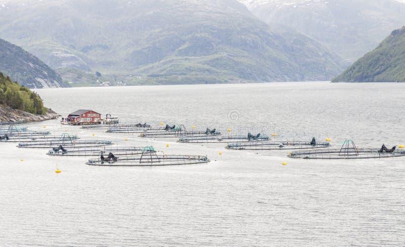 Impresa di piscicoltura - Norvegia fotografie stock libere da diritti