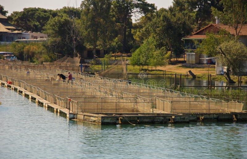 Impresa di piscicoltura Turchia fotografie stock libere da diritti