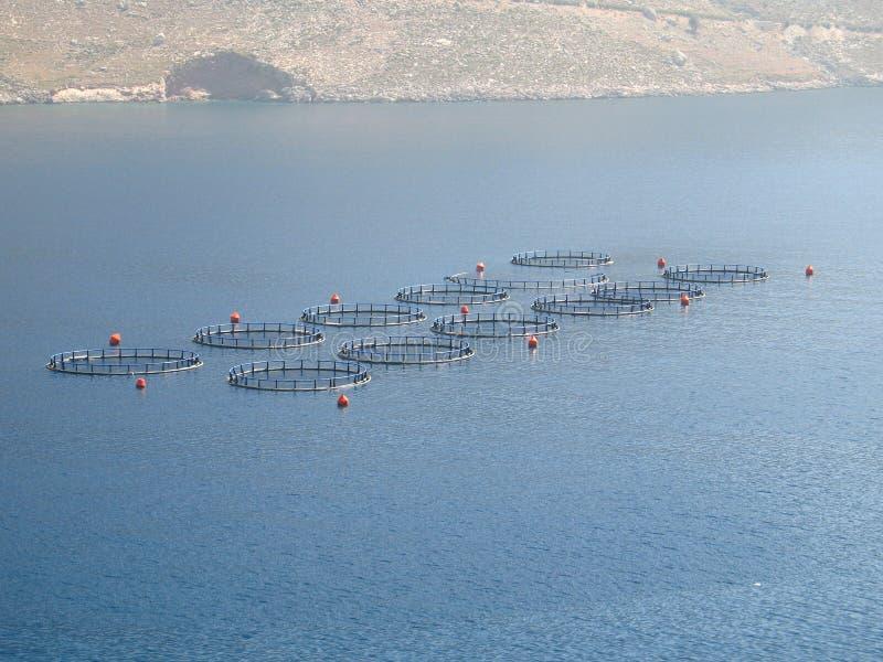 Download Impresa di piscicolture fotografia stock. Immagine di ittiologia - 207330