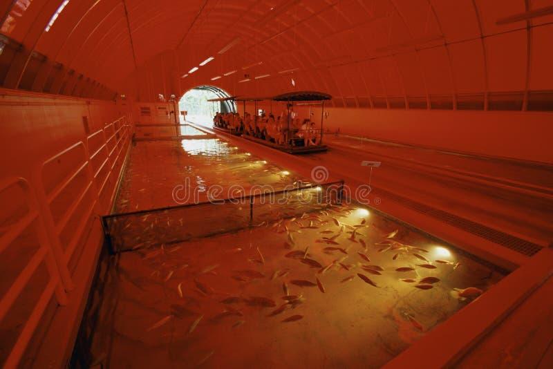 Impresa di piscicolture immagini stock libere da diritti