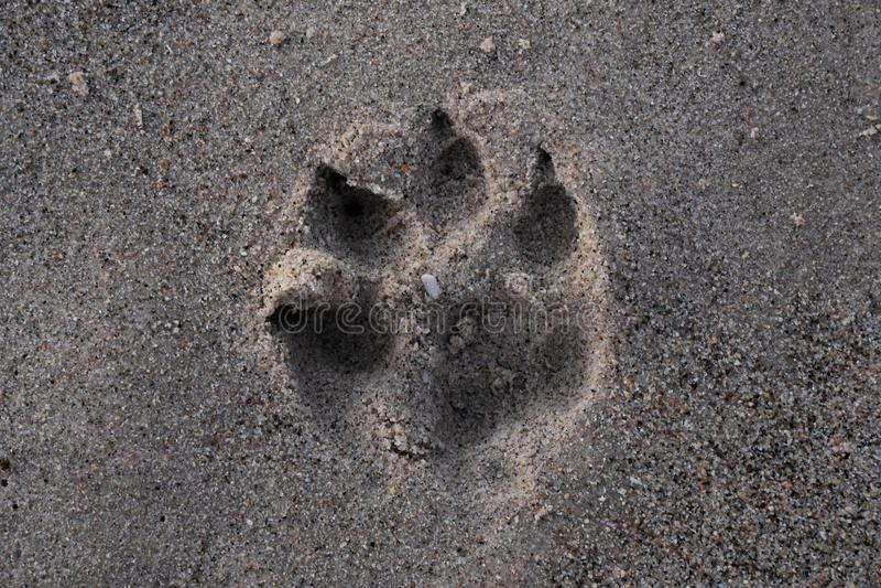 Impresión de la pata del perro en la arena foto de archivo libre de regalías