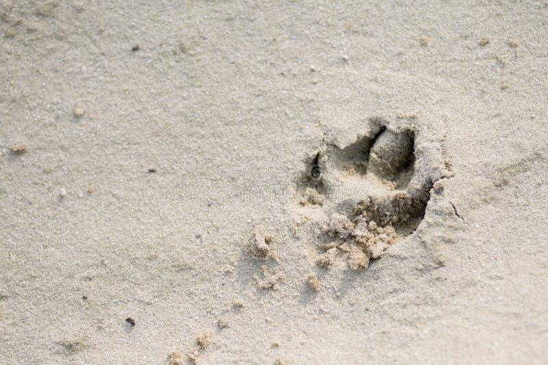Impresión de la pata del perro en arena imagenes de archivo