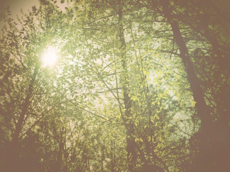 Impresión de la primavera foto de archivo
