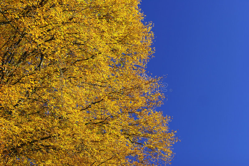 Impresión del otoño fotos de archivo