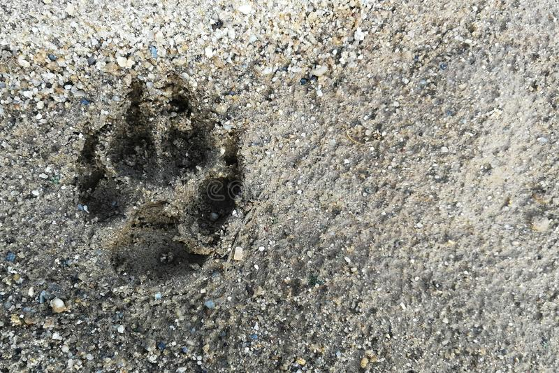 Impresión del pie del perro en la tierra mojada de la arena imágenes de archivo libres de regalías