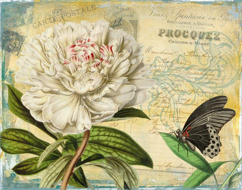 Impresión floral de la peonía del vintage con texturas francesas de la factura y de las Ephemeras ilustración del vector