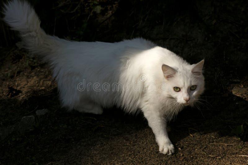 Impresiones de alta calidad de la bella arte de los papeles pintados macros del fondo del retrato del gato que sorprenden blanco fotos de archivo