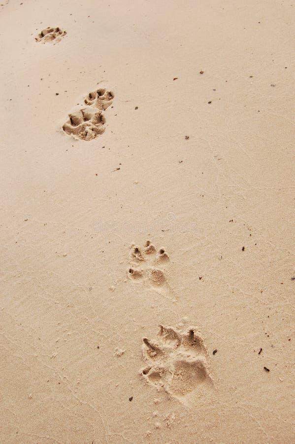 Impresiones de la pata del perro imagen de archivo libre de regalías
