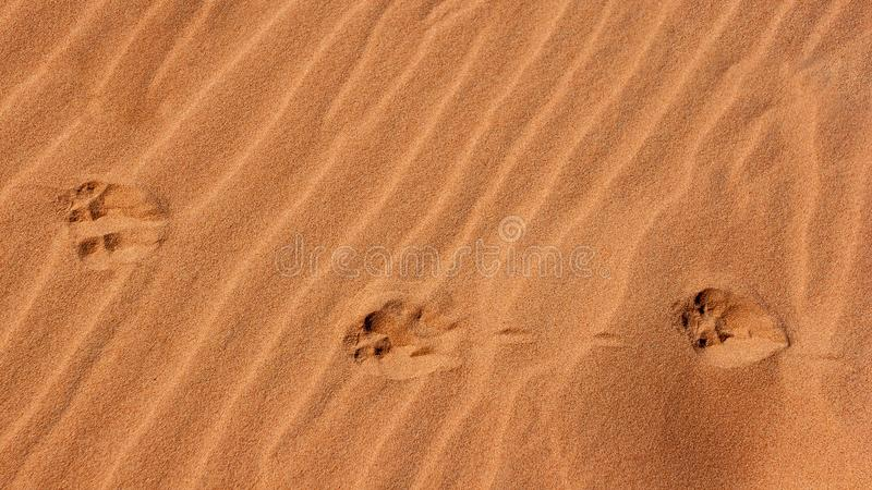 Impresiones de la pata en la arena fotografía de archivo libre de regalías