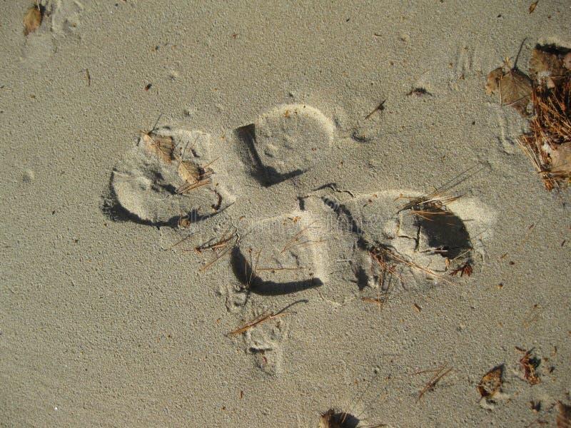 Impresiones del pie que van la manera opuesta foto de archivo libre de regalías