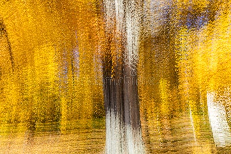 Impresjonistyczny Żółty drzewo, Nowa Anglia, wieloskładnikowi ujawnienia, Październik 18, 2016 fotografia stock