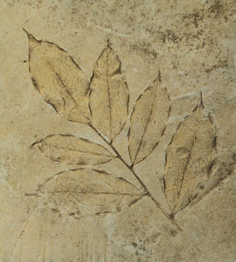 A impressão as folhas no cimento pavimenta fotos de stock
