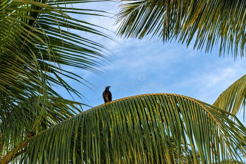 Impressões da praia e do feriado com as palmas em Maurícias fotos de stock royalty free