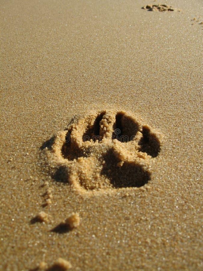 Impression de patte en sable photos stock